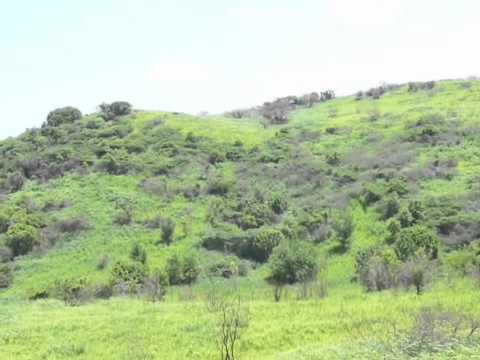 CulebraTreasures.com – Carenero Land Lot