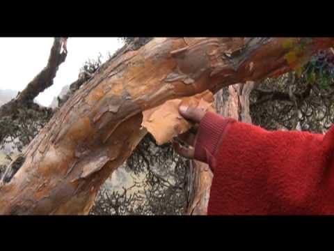 Video clip, Chimborazo, Las Palmas, Zapotillo – ECUADOR AMA LA VIDA (P12/T1) – HD