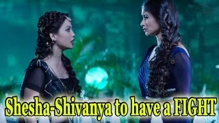 Shesha-Shivanya to have a FIGHT width=