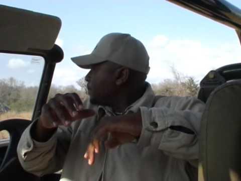 Odławianie nosorożca w Parku Krugera 1/3