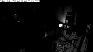 Live stream BUDA::lab