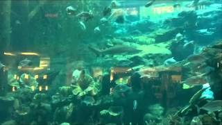 Dubai Aquarum under water zoo at Dubai Mall. having fun with Maki and Majid by Ahsan Sajid.