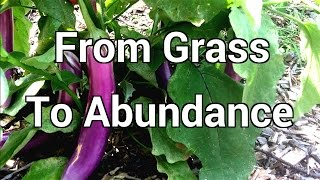 From Grass to Abundance in A Short Time