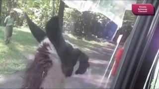 Ada Serigala di Taman Safari Prigen Pasuruan