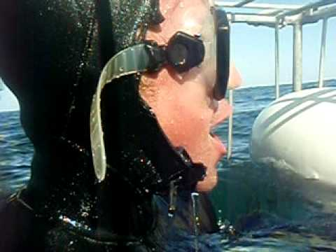 Shark Diving Outside Cape Town