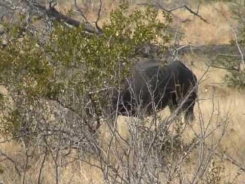Nosorożec w Parku Krugera