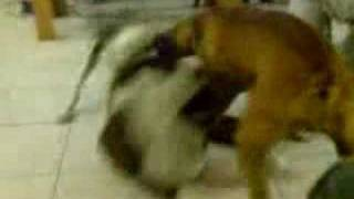 kimba & kuma - family fight!