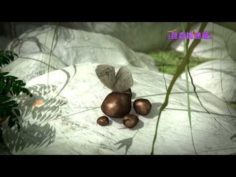 《昆蟲捉迷藏》來無影去無蹤的神祕蝴蝶【低調的舞者:食腐蝴蝶】 - YouTube