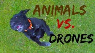 Drone Videos – Animal vs  Drones Compilation