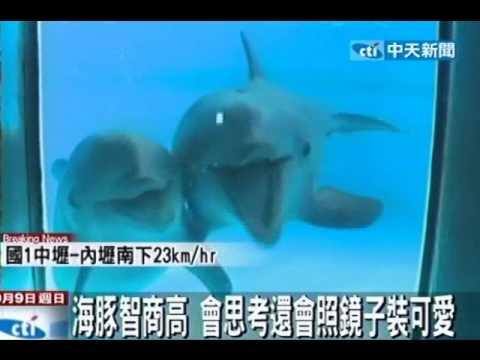 海豚智商高 會思考還會照鏡子裝可愛 - YouTube