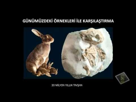 CANLILIK TARİHİ - 2