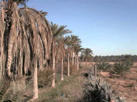 The South of Algeria