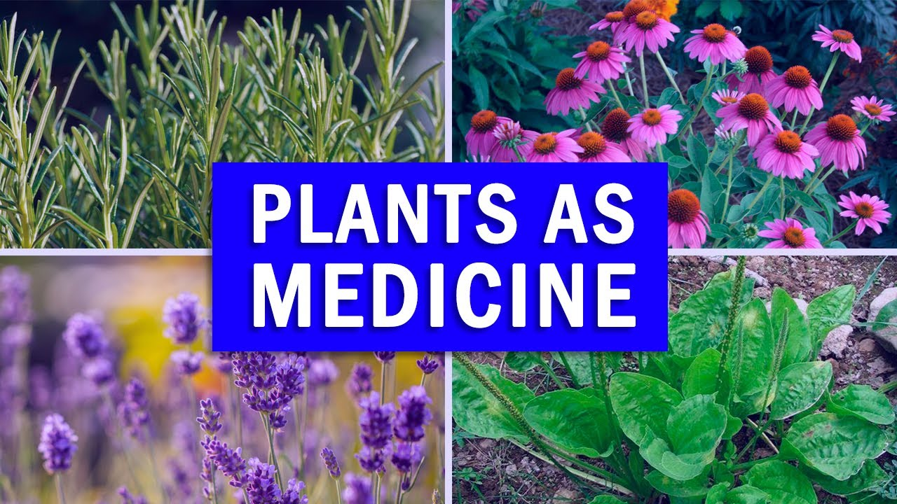 5 Powerful Medicinal Plants you must have at Home