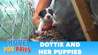 Hope For Paws: Homeless mom gives birth to three puppies on a college campus. Please share. width=