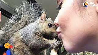 Squirrel Keeps Coming Back To Rescue Mom - GIBBY | The Dodo width=