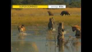 Super Domingo - Animais Selvagens