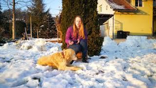 Pozitron Plus - DOG PROTECT   Mirta- Slovenija