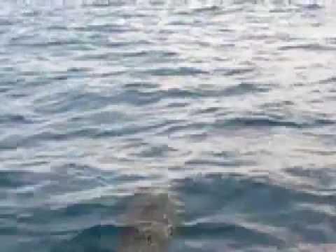 Dolphins near San Juan del Sur