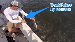 Trout Pukes Up Half-Digested Mullet on Angler