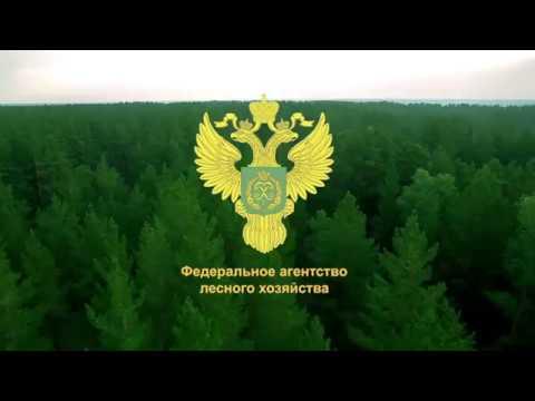 Лес - Национальное достояние