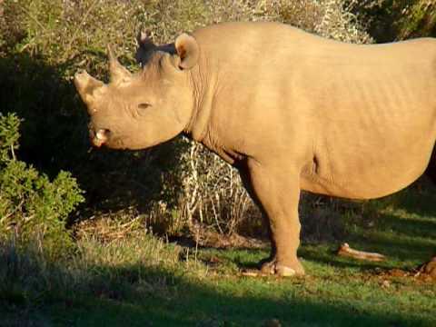 South Africa 2008 Day 24 594 Black Rhino
