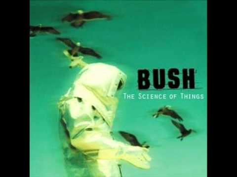 bush-learning-to-swim-mateusz5500