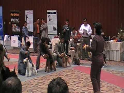 ECUADOR DOG SHOW