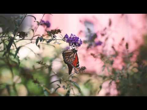 El Calvario de Riccie Oriach Letra y Video