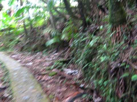 Fred in the Yunque in P.R. going to the mountain top Pt.1