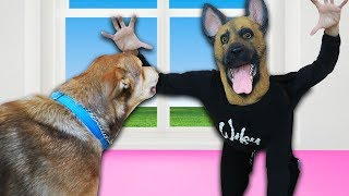 Pranking our Dogs for 24 hours While Bored at New Home!