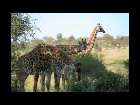 Kruger_Nat_Park_Photographs.m4v