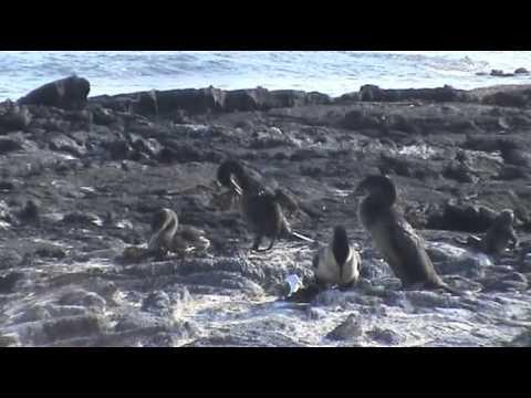 Viaje a las Islas Galápagos (2ª Parte)