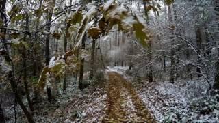 Revenant- Forest