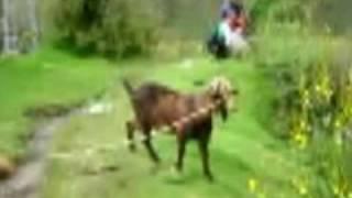 """Shyne & Man Goat """"Bad Boyz (Remix)"""