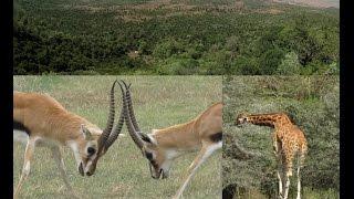 30. ΑΙΘΙΟΠΙΑ - ETHIOPIA