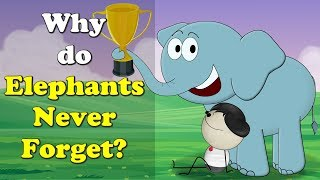 Why do Elephants Never Forget? | #aumsum #kids #education