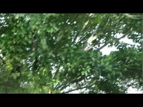 Monkeys in Selva Negra