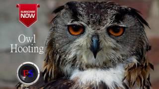 Sound Owl hooting Free Sound Effect