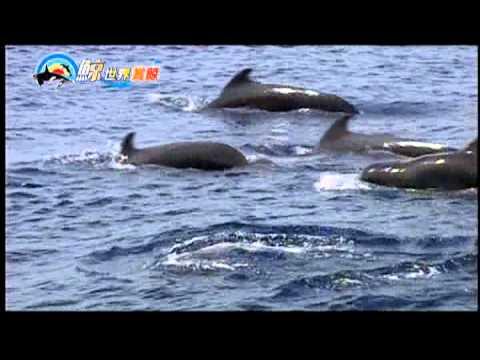 [HD.高畫質] 鯨世界賞鯨 生態旅遊 介紹 - YouTube