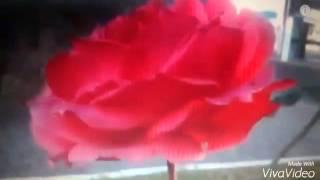 A mais linda flor do meu jardim