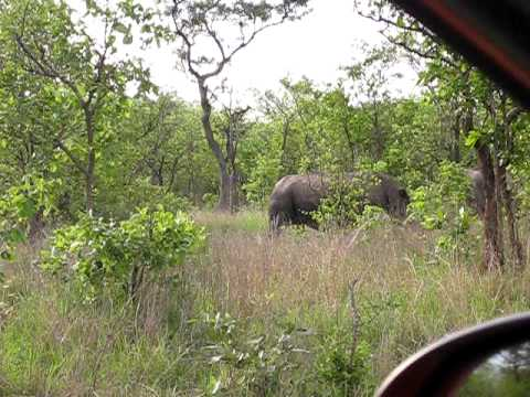 South Africa Kruger Park – two rhinos passing by real close OMG how impressive that is