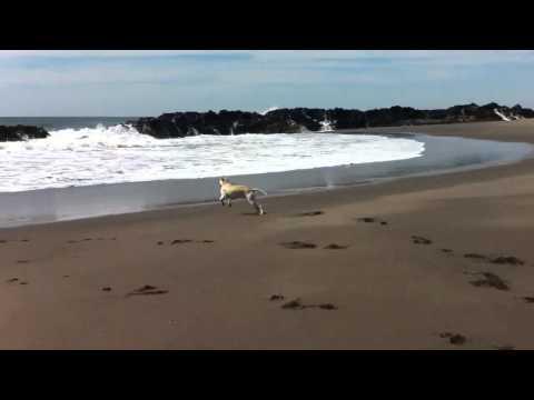 Beach boy dog