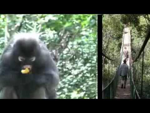 Monkey Land – Plettenberg Bay, South Africa