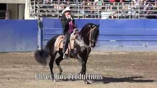 Chapo De Sinaloa ( Pico Rivera Sports Arena ) 1080p HD  5/11