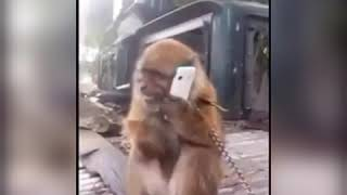 Eminem fast rap by monkey must watch