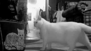 Holly the Cat - Reflection (Mulan)