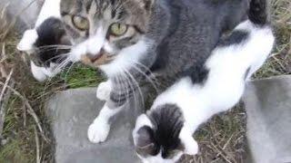 母猫を撫でたらお礼に子猫をうじゃうじゃ連れてきたwww