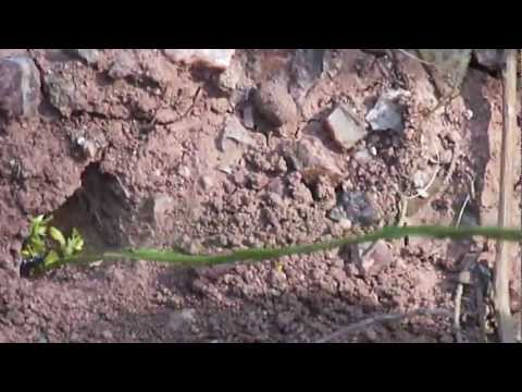 How to catch a scorpion in Morocco