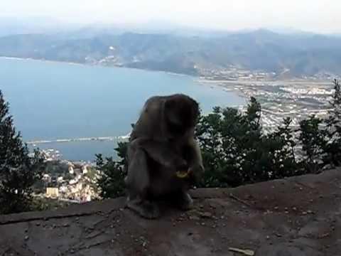 les singes de Yemma Gouraya a Bejaia