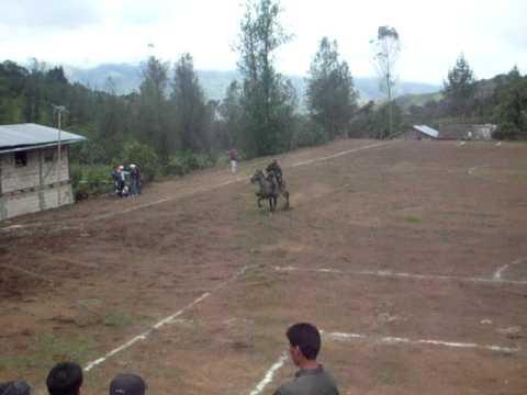 Concurso caballos de paso Bilovan